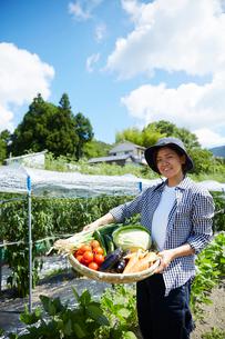 畑で野菜を盛ったカゴを持つ女性の写真素材 [FYI02523603]