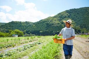 野菜が入ったカゴを抱えて歩く男性の写真素材 [FYI02524144]