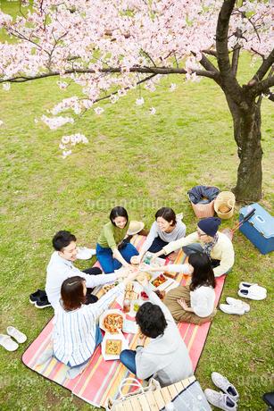 お花見をする男女7人の写真素材 [FYI02524185]