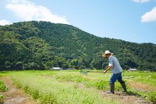 畑を開拓している男性の写真素材 [FYI02524462]