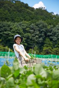 畑で野菜を入れた木箱を持つ笑顔の女性の写真素材 [FYI02525099]