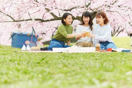 お花見をする女性3人の写真素材 [FYI02525169]