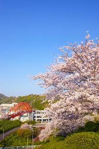音戸大橋と桜の写真素材 [FYI02525720]