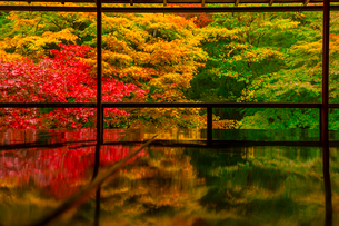 紅葉の瑠璃光院の写真素材 [FYI02525946]