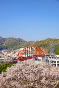 音戸大橋と桜の写真素材 [FYI02526173]