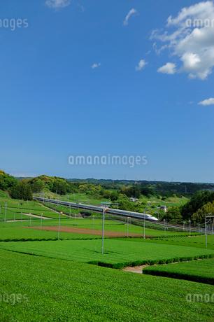 茶畑と東海道新幹線の写真素材 [FYI02528503]