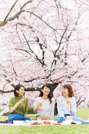 お花見をする女性3人の写真素材 [FYI02528703]