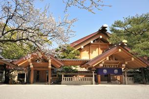 熱田神宮神楽殿とならずの梅の写真素材 [FYI02528850]