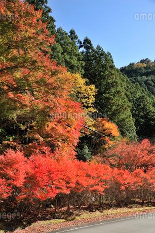 寸又峡の紅葉の写真素材 [FYI02529683]