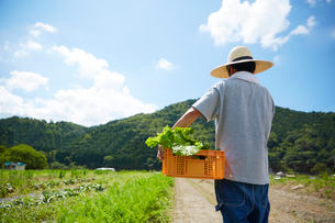 野菜が入ったカゴを抱えて歩く男性の後ろ姿の写真素材 [FYI02531677]