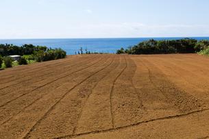 与論島の畑の写真素材 [FYI02533029]