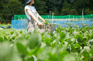 畑で野菜を入れた木箱を持って空を見上げる女性の写真素材 [FYI02534114]