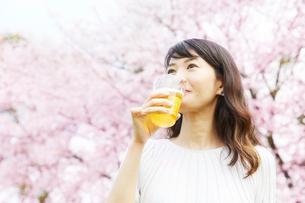 桜の木の下でビールを飲む女性の写真素材 [FYI02536381]