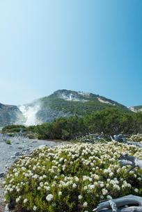 川湯硫黄山とイソツツジとハイマツの写真素材 [FYI02538482]