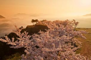 竹田城の雲海と桜の写真素材 [FYI02540569]