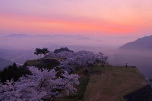 竹田城の雲海と桜の写真素材 [FYI02540581]