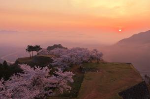 竹田城の雲海と桜の写真素材 [FYI02540656]