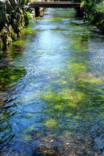 滋賀県 醒井 地蔵川の写真素材 [FYI02541007]