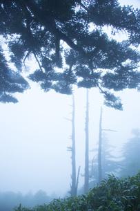 霧の瓶ヶ森の写真素材 [FYI02541284]