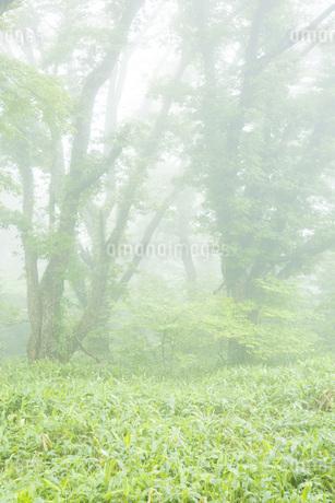 霧の風景の写真素材 [FYI02541304]