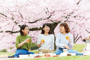 お花見をする女性3人の写真素材 [FYI02542525]