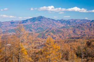 カラマツ林と秩父山地の写真素材 [FYI02542695]