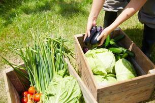 木箱に野菜を詰める女性の手元の写真素材 [FYI02543710]