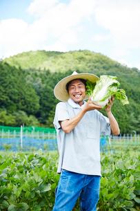 畑で白菜をかかえる男性の写真素材 [FYI02543721]