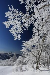 台高山脈の樹氷の写真素材 [FYI02546142]