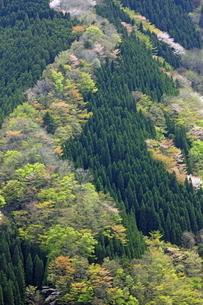 新緑の山肌の写真素材 [FYI02546156]