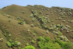 シロヤシオ満開の竜ヶ岳(鈴鹿山脈)の写真素材 [FYI02546242]