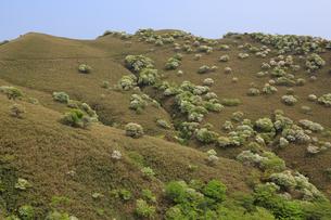 シロヤシオ満開の竜ヶ岳(鈴鹿山脈)の写真素材 [FYI02546252]
