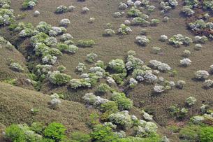 シロヤシオ満開の竜ヶ岳(鈴鹿山脈)の写真素材 [FYI02546429]