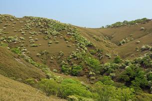 シロヤシオ満開の竜ヶ岳(鈴鹿山脈)の写真素材 [FYI02546430]