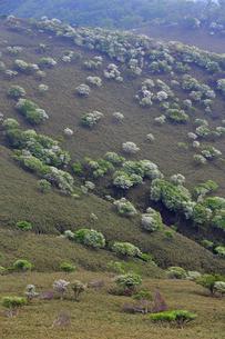 シロヤシオ満開の竜ヶ岳(鈴鹿山脈)の写真素材 [FYI02546444]