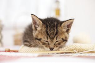 編み物の上で眠る猫の写真素材 [FYI02548539]
