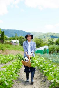 野菜を持って畑を歩く女性の写真素材 [FYI02550280]