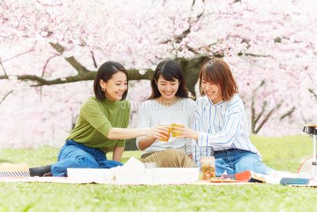 お花見をする女性3人の写真素材 [FYI02550416]