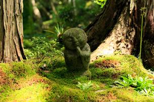5月新緑,大原三千院のわらべ地蔵の写真素材 [FYI02556194]