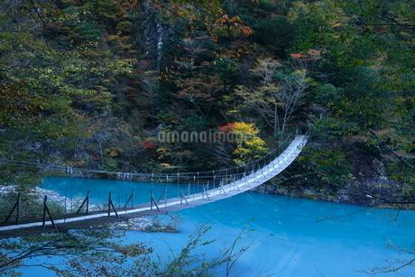 11月 夢の吊橋 紅葉の寸又峡の写真素材 [FYI02556276]