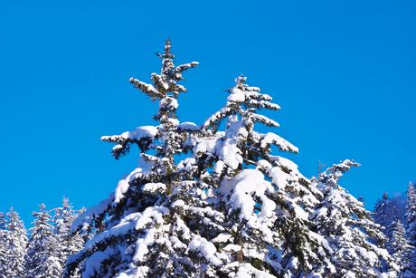 冬の木々の写真素材 [FYI02556373]