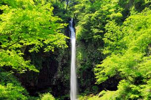 5月 緑の阿弥陀ヶ滝の写真素材 [FYI02556607]