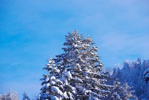 冬の木々の写真素材 [FYI02556703]