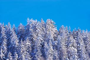 冬の木々の写真素材 [FYI02557026]