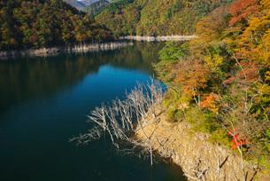 徳山湖の秋の写真素材 [FYI02557099]