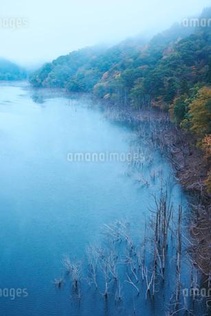 徳山湖の朝の写真素材 [FYI02557136]