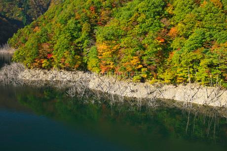 徳山湖の秋の写真素材 [FYI02557244]