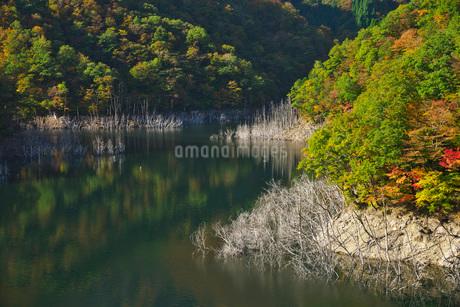 徳山湖の秋の写真素材 [FYI02557322]