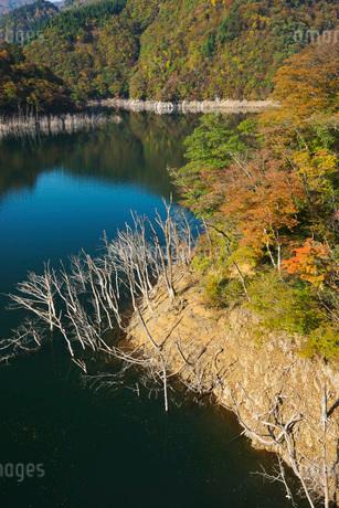 徳山湖の秋の写真素材 [FYI02557324]