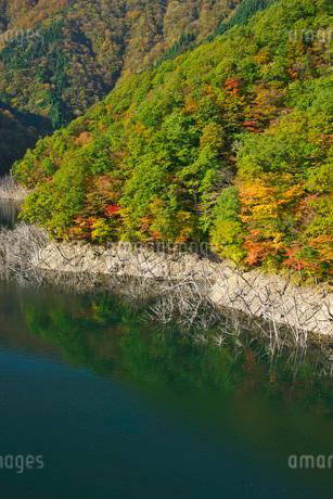 徳山湖の秋の写真素材 [FYI02557363]